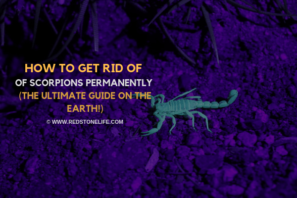 How to Get Rid of Scorpions Permanently - (The Ultimate Guide on the Earth!) - Redstonelife.com