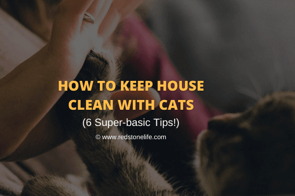 How to Keep House Clean With Cats: 6 Super-basic Tips!